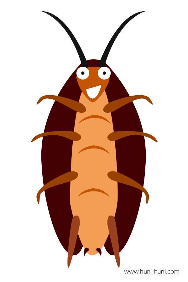 flashcard-color-insect-cockroach-uk-ok